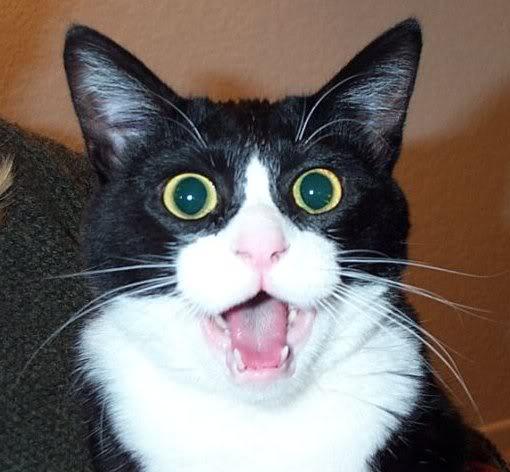 a64d2-shockedcat_1