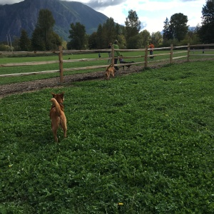 Three Forks Dog Park in Snoqualmie, Washington
