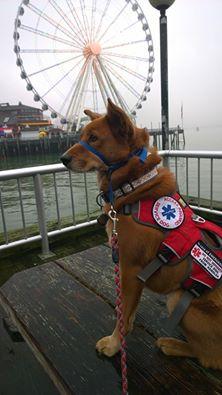 pier - Service Dog